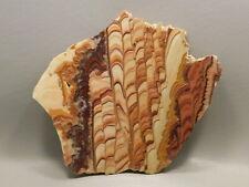 Wave Dolomite Polished Stone Slab 5.2 inch Rock Rolling Hills Dolomite Mexico #6
