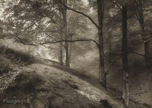 1946/56 Vintage JOSEF SUDEK Czech Forest Trees Landscape Original Photo Gravure