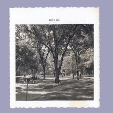 Vintage Photo JUNE 1961 Gorgeous Trees SHADED WALK