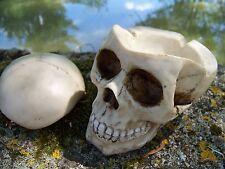 30102  FIGURINE  CRANE TETE  DE MORT BOITE   CENDRIER  GOTHIQUE      DERNIER