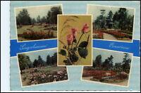 DDR AK Sachsen-Anhalt 1962 SANGERHAUSEN Rosarium Blumen Motive Park Garten