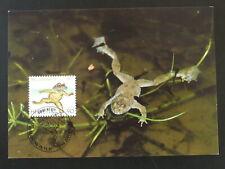 frog Pro Juventute 1997 maximum card Switzerland 94450