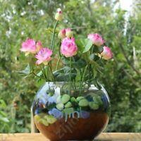 10 Graines Fleurs de LOTUS Sacré ROSE Cultiver en intérieur BASSIN Toute l'Année