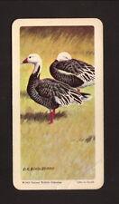 Blue Goose--1962 Brooke Bond American Tea Card