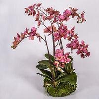 Kunst Orchidee Phalaenopsis PABLA im Moosballen, rosa, 80cm - künstlich