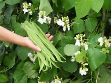 Kings Seeds - Vegetable - Runner Bean Moonlight - 45 Seeds