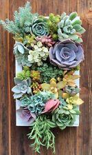 Home & Garden   Yard, Garden & Outdoor Living   Plants, Seeds & Bulbs   Plants &