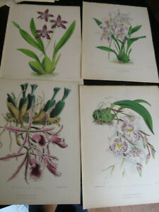 Orchids - New Series, Floral Magazine New Series 4 plates