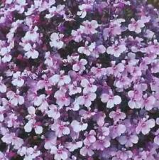 Lobelia Summer Annual Biennial Flower Plant Seeds For Sale Ebay