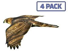 Northern Goshawk Eagle Hawk Birds of Prey Sticker Vinyl Decal 1-015