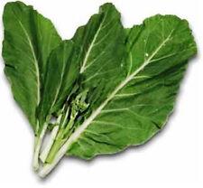 CHINESE KALE 100 seeds Asian broccoli vegetable kai-lan leafy green kailaan