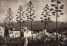 1924 Original NORTH AFRICA Tunisia Seascape Landscape Tree By LEHNERT & LANDROCK