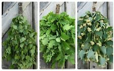 30-piece Set:10 Birch,10 Oak,10 Linden Sauna Whisk Venik Broom Wenik Reisig