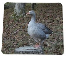 "Majestic Goose ""lulu""  wildlife Country Anti slip COMPUTER MOUSE PAD 9 X 7inch"