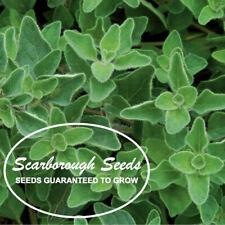 SCARBOROUGH SEEDS 1000 Greek Oregano Seeds Herb Heirloom NON-GMO Fragrant USA!