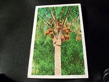 Old Vintage Postcard- Coconut Tree, Hawaiian Islands