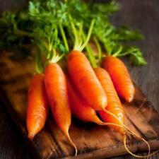 Little Finger Carrot Seeds | Vegetable Seeds for Planting | Non-GMO
