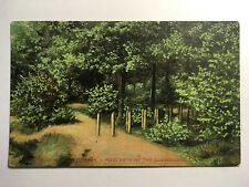 London Postcard - Wimbledon Common - Footpath by the Queensmere - Posted 1908