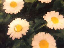 Wiesen - Gänseblümchen, Maßliebchen ,Blumen, Samen, mehrjährig