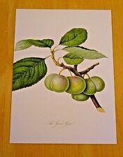 RHS FRUIT & VEGETABLE POSTCARD ~ GREEN GAGE PLUM BY WILLIAM HOOKER, 1779-1832