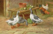 Greetings Postcard 1977 Farmyard Scene Geese Hens Vegetables (LA)