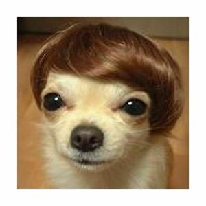 Dog Costumes colorfull synthetic hair pet wig lovely pet dog wigs Bob Brown TP21