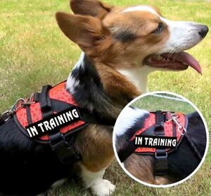 Service Dog In Training Strong Harness Reflective No-Pull Walk Vest with Handle