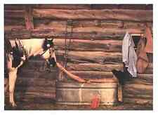 Nose to Toes by David R. Stoecklein Art Print Cowgirl Western Photo Poster 14x19