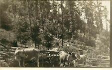 c1910 RPPC Postcard; Oregon Dairy Farm, Jersey Milk Cows with Bells, unposted