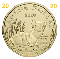 2020 New Canada $1 Special Dollar Coin Loonie! Black-Footed Ferret, UNC, 2020