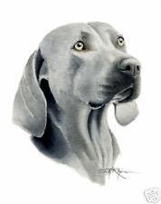 WEIMARANER ART Print DOG Watercolor Painting 8 x 10 Signed by Artist DJR w/COA