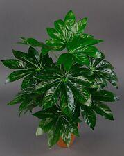 Aralie Real Touch 50cm grün im Topf ZJ Kunstpflanzen künstliche Pflanze
