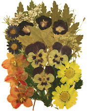 Pressed Flowers, torenia Daffodils Daisy Alyssum Foliage