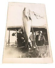 antique dolphin fishing florida postcard Hunting Porpoise Boating Vintage