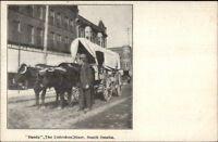 South Omaha NE Dandy the Unbroken Steer c1905 Postcard