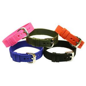 Bioflow Explorer Wristband - Spare / Replacement Strap - Various Colours / Sizes