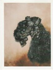 Kerry Blue Terrier Head Study 6 Notecards & 6 Envelopes Gift Boxed Ruth Maystead