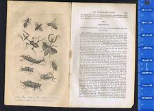 Queen Bee, Wasp, Locust, Cricket & Grasshopper - 1830 Goldsmith Engraving