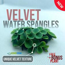 50+ Leaf Velvet Water Spangles (+Free Bonus Plant) Aquarium Floating Plant