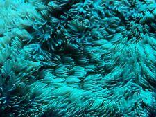 Bright Green hydenophora coral