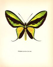 "1963 Vintage PROCHAZKA BUTTERFLY ""THE TAILED BIRDWING"" GORGEOUS COLOR Lithograph"