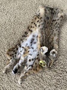 BOBCAT Pelt Jaguar NICE! Spotted Hide Tanned Rustic Log Cabin Wild Country Furs