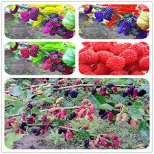 100pcs3+Colors Super Big Mulberry Fruit Seeds  Pots Strawberry Bonsai Blackberry