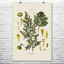 Absinthium Botanical Art Print Absinth Art Print Home Bar Decor Bartender Gift