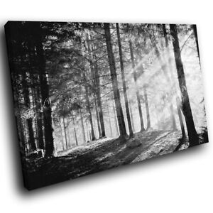 SC379 Black White Forest Retro Landscape Canvas Wall Art Large Picture Prints