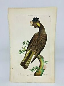Funereal Cockatoo - 1783 RARE SHAW & NODDER Hand Colored Copper Engraving