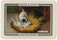 Playing Cards Single Card Old Wide BLACK WHITE Whisky Advertising Art PUPPY DOGS