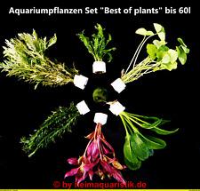 Aquariumpflanzen Set 60l 40-50 Wasserpflanzen in 6 XXL Bund + Moosball