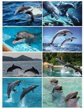 DOLPHIN PHOTO-FRIDGE MAGNETS 8 IMAGES