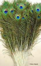 10 Natural Peacock feathers w Iridescent Blue Green Eyes 30-35